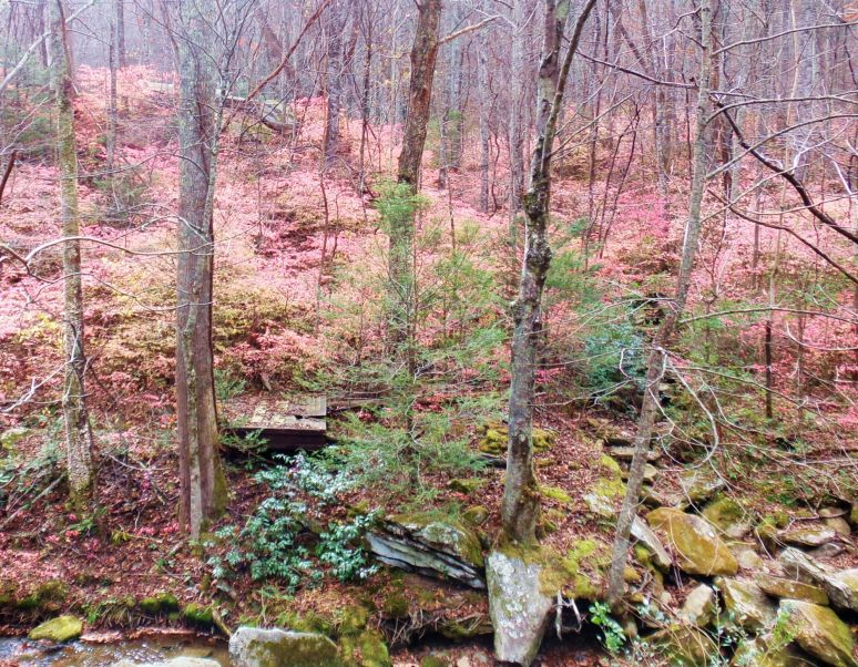 Pink Leaves and Rocks