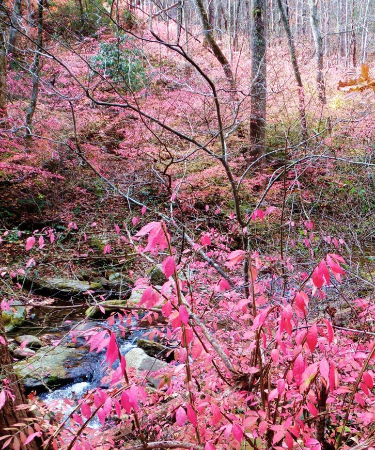 Pink Leaves Detail