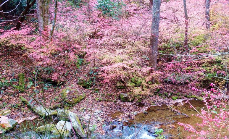Pink Leaves Hillside
