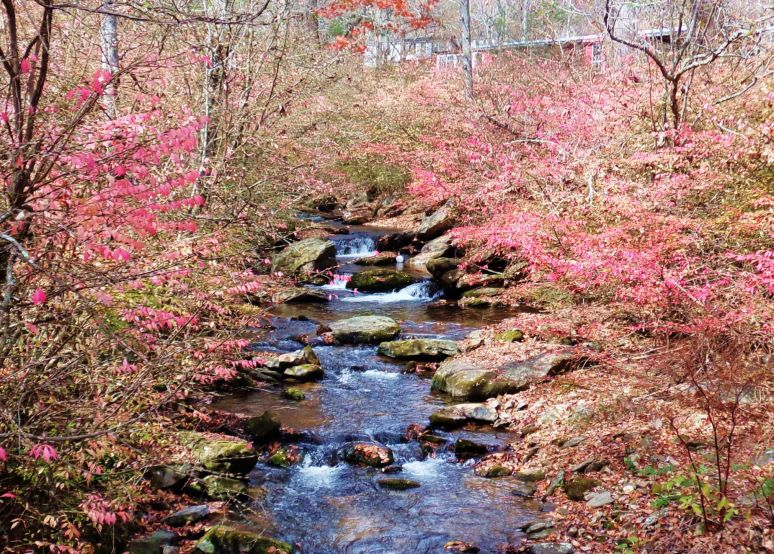 Pink Leaves Stream
