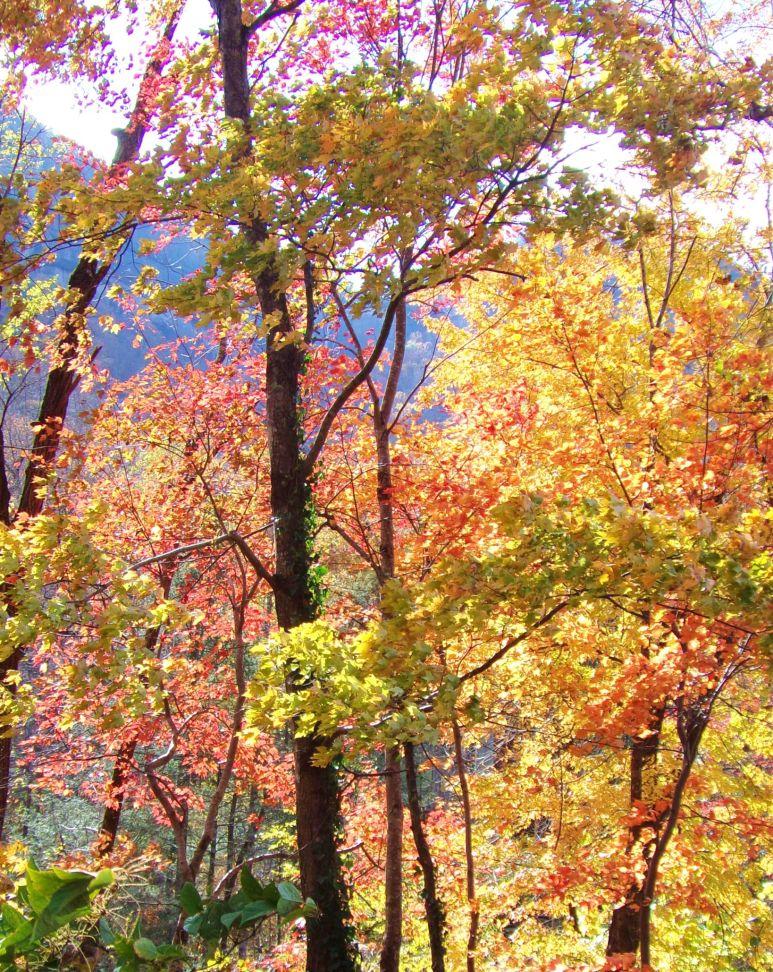 Broad River autumn