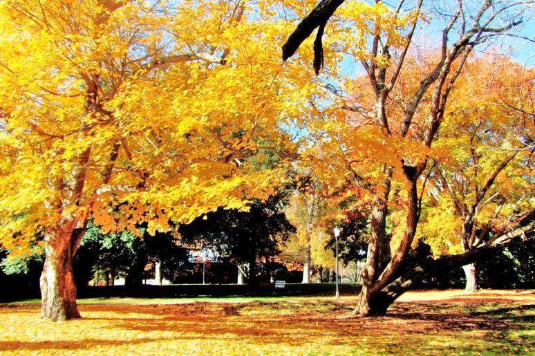 Davidson College Trees
