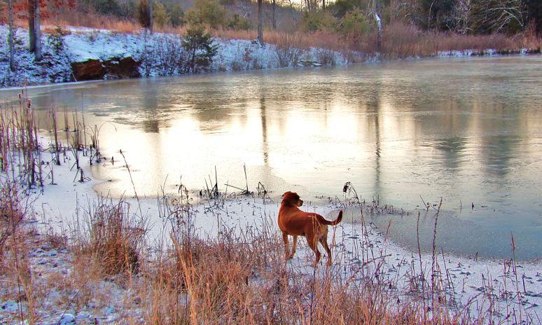 """Buddy"" on Frozen Otter Pond"