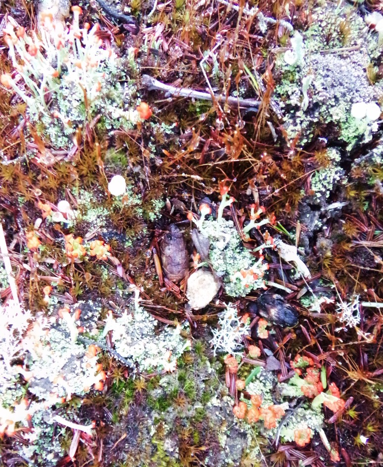 Moss and leichens on Forest floor