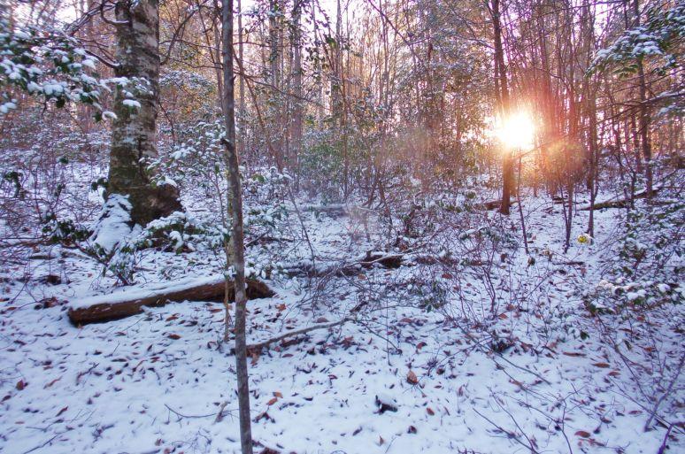 Otter Creek Woods Sunrise