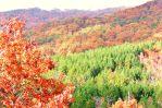 Loblolly Autumn
