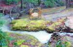 Moss Covered CreekBank