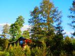 Towering Hemlock Trees