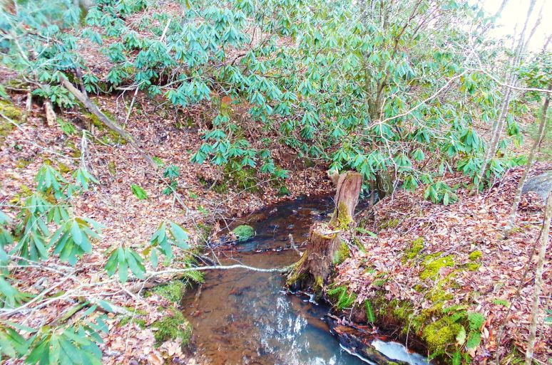 Rhododendron Creek