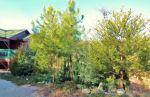 Evergreen Rock Garden