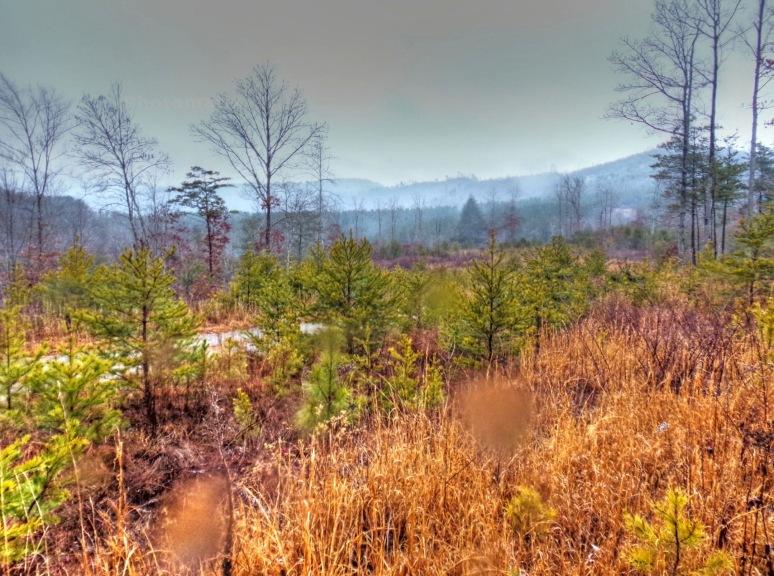 Otter Creek Valley Ridges