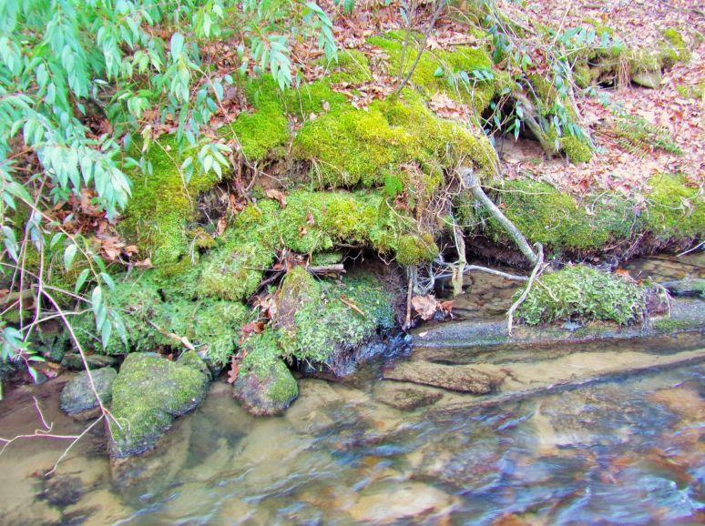 Moss Covered Rocks