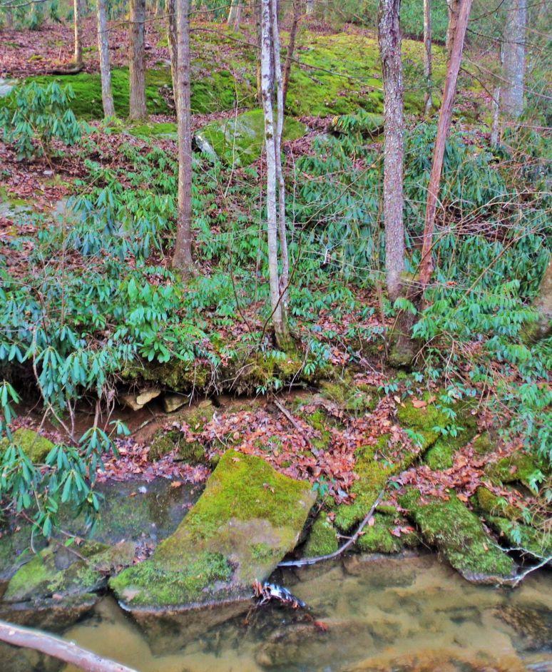Otter Creek Hillside