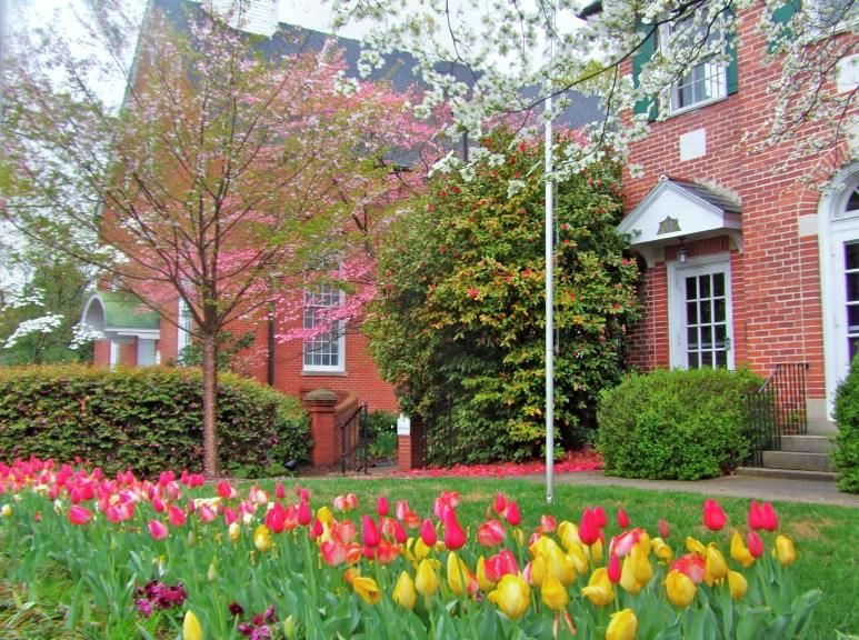 Charlotte Myers Park tulips