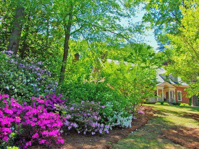 Madison, Ga., Azalea Garden