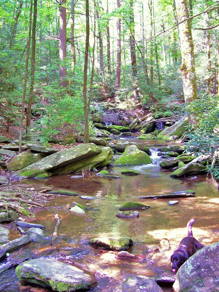 Catawba River Headwaters