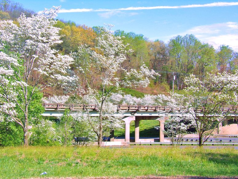 Interstate 40 Interchange Dogwood
