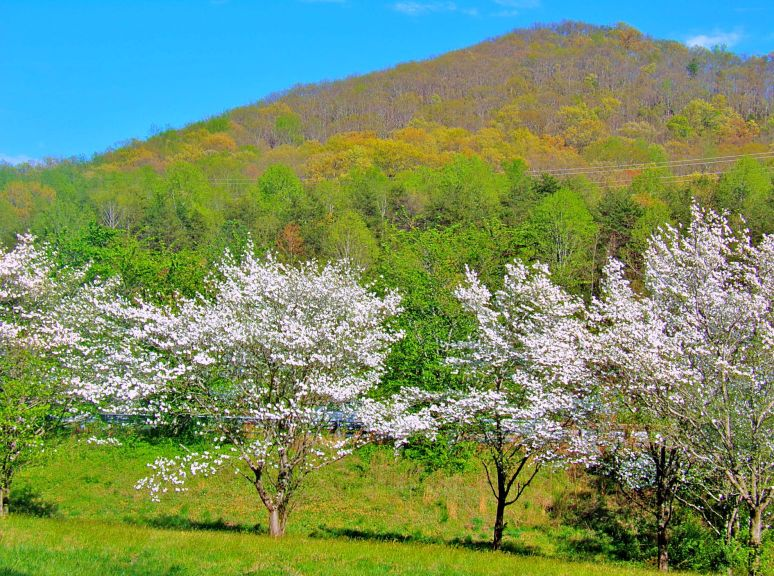 Dogwood Mountain