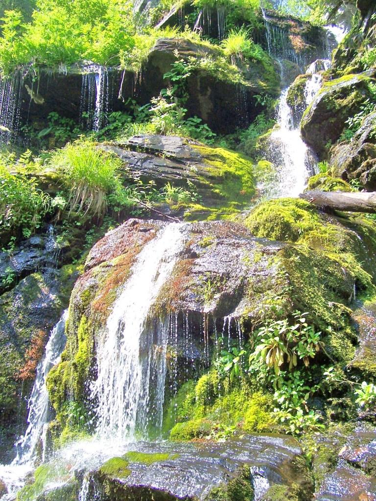 Catawba Falls Green