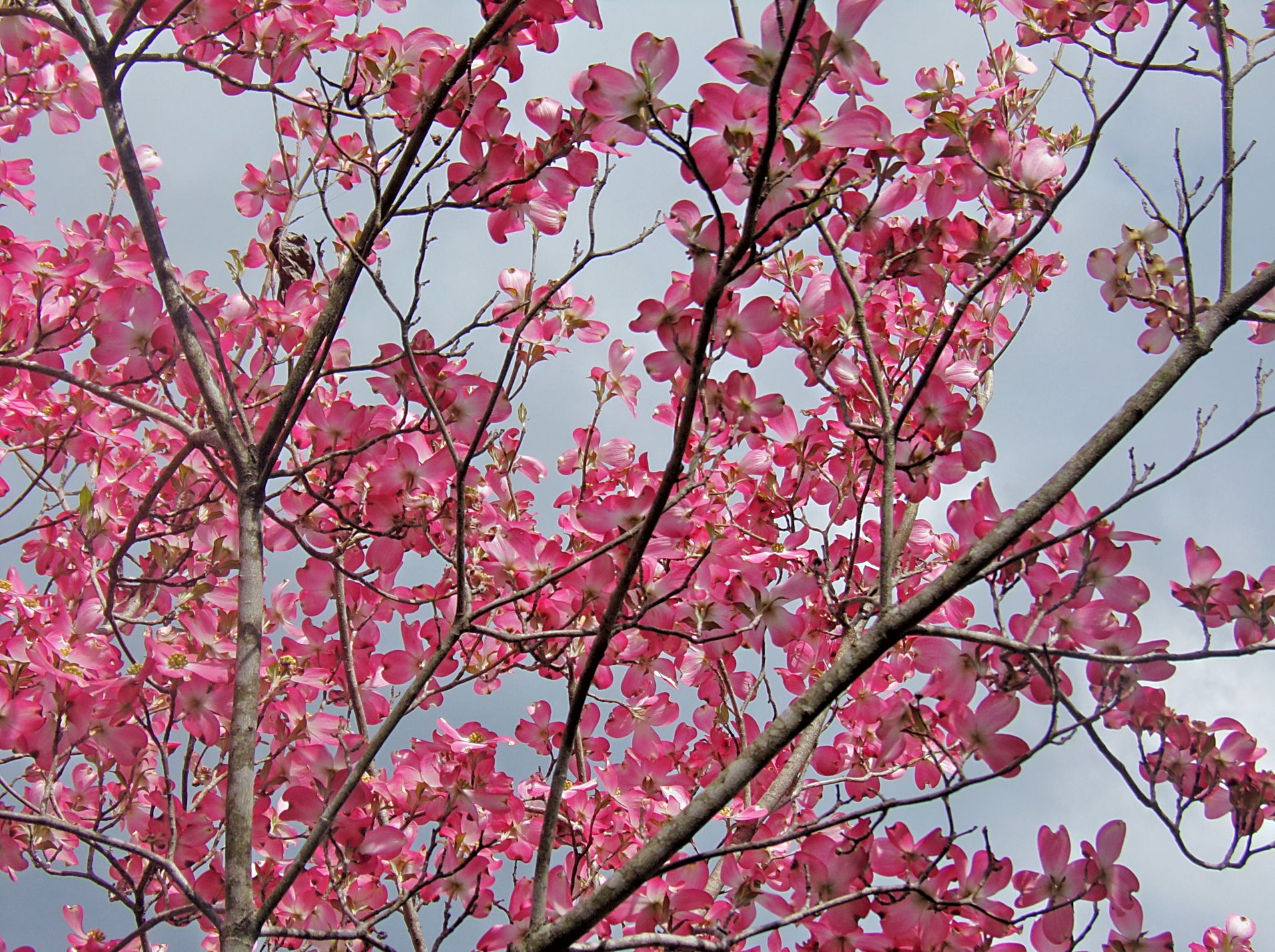 Flowering Trees before the Deep Freeze | Living in The ... - photo#33