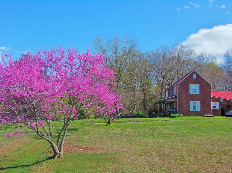 Redbud and Brick Farmhouse