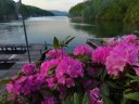 Cawtaba Rhododendron at Lake Lure