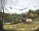 Cataloochee Elk by Richard Devine