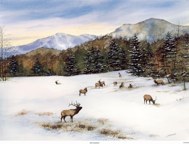 Winter Cataloochee Elk