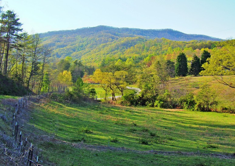 Green Hickorynut Mountain