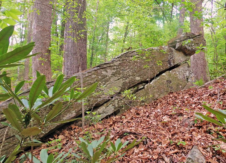 Ancient Carolina Rock