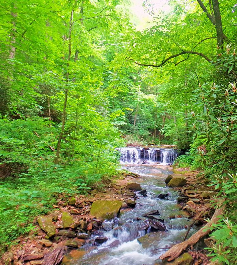 Below Pearson's Falls