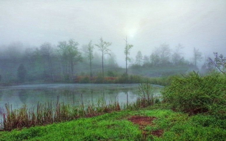 Otter Creek Pond Fog