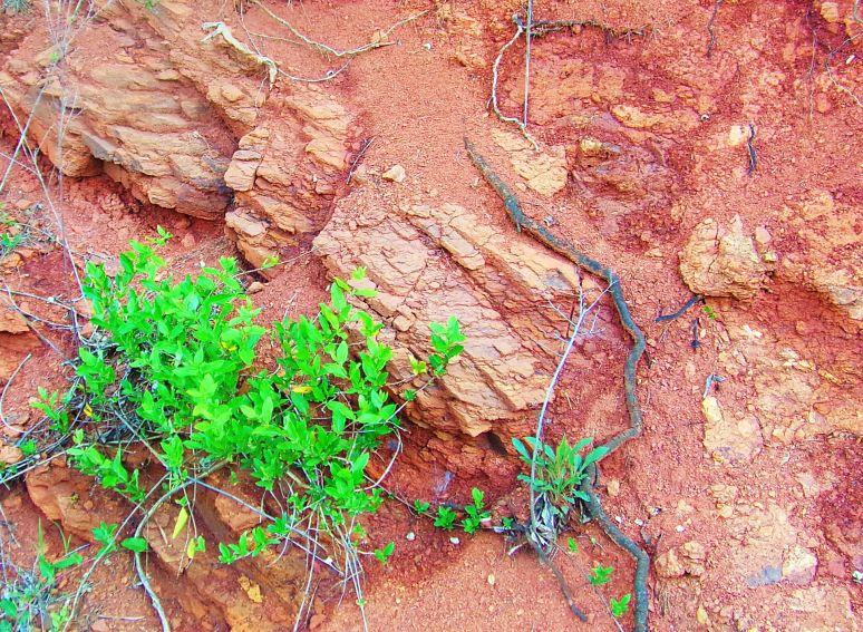 Iron Rich Red Carolina Clay