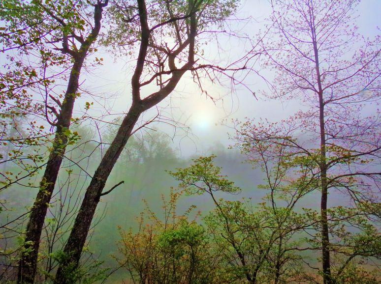 Otter Creek Valley Fog