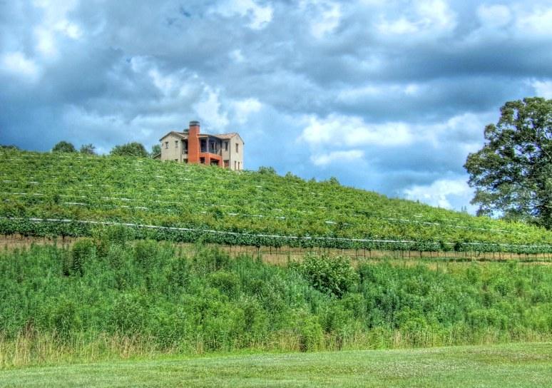 Montaluce Vineyard Hillside