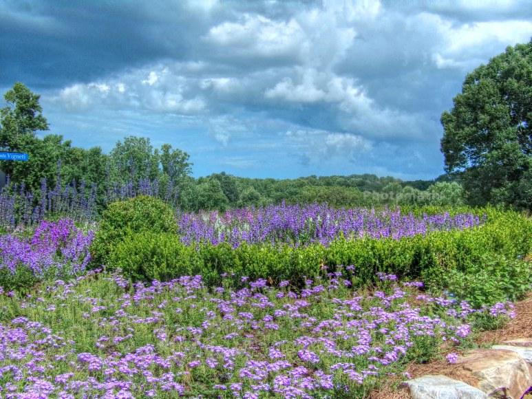 Montaluce Vineyards Meadow