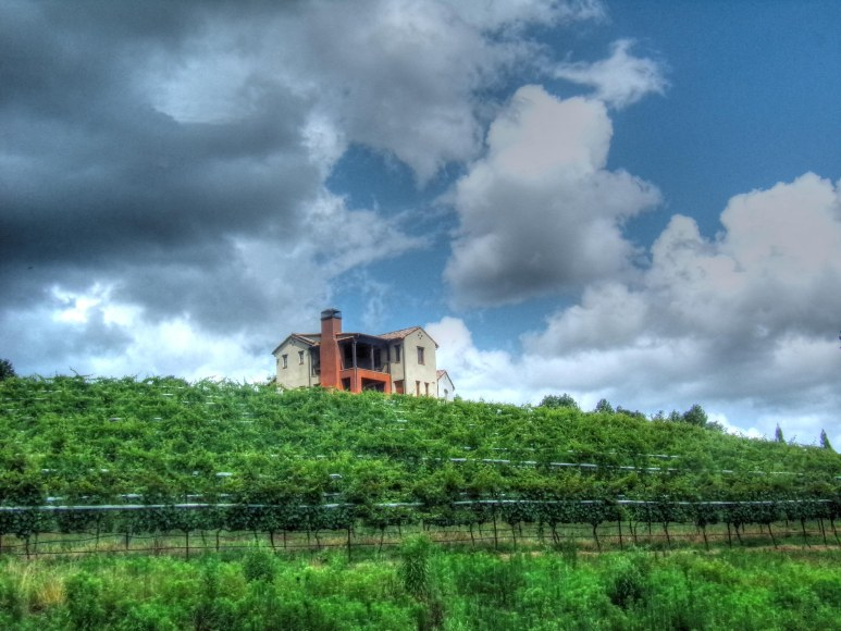 Montaluce Vineyard Villa