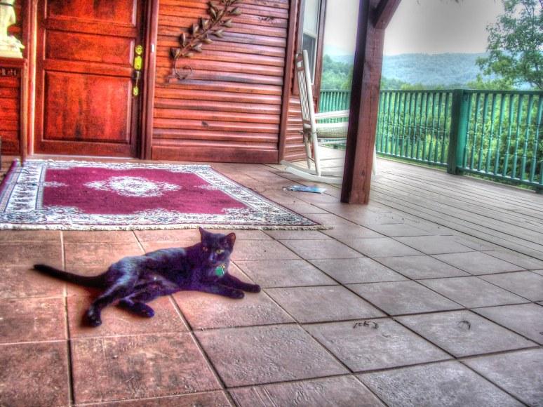 Black Cat On Tile Porch