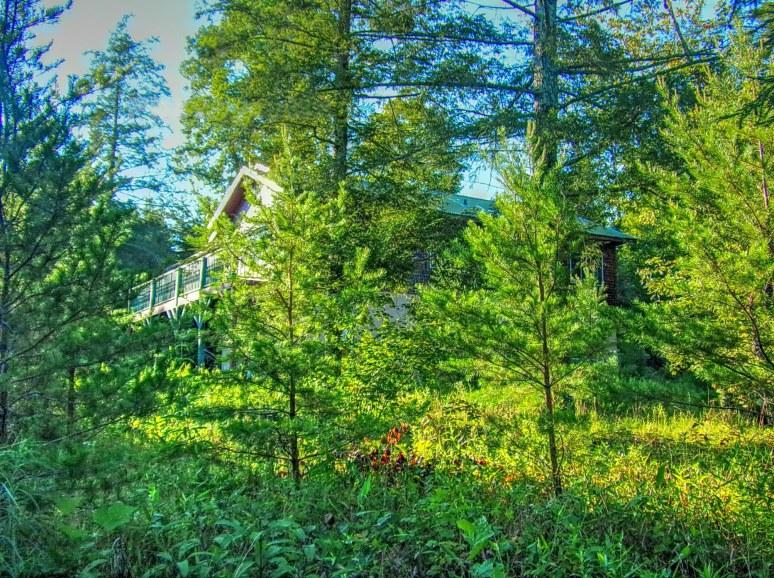 Hemlock House with Pines