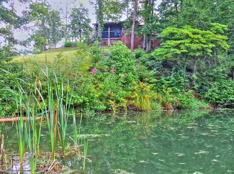 Otter Creek Cabin and cattails