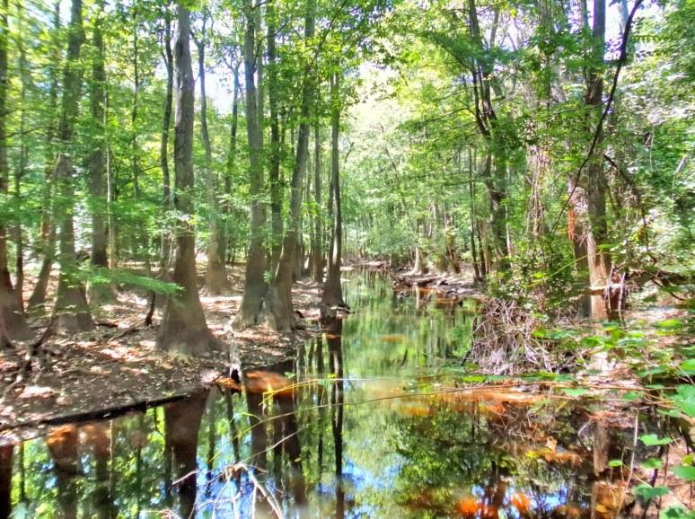 Congaree Cedar Creek