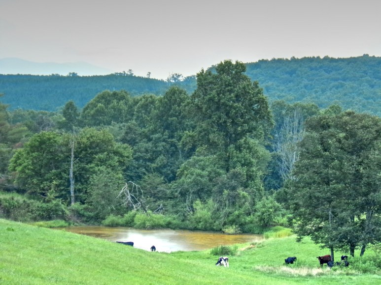 Rutherford County Pastures