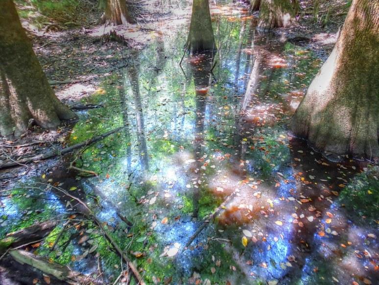 Congaree Cypress Swamp