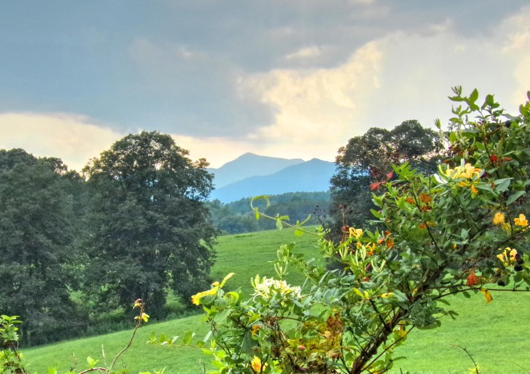 Rutherford Honeysuckle Mountain