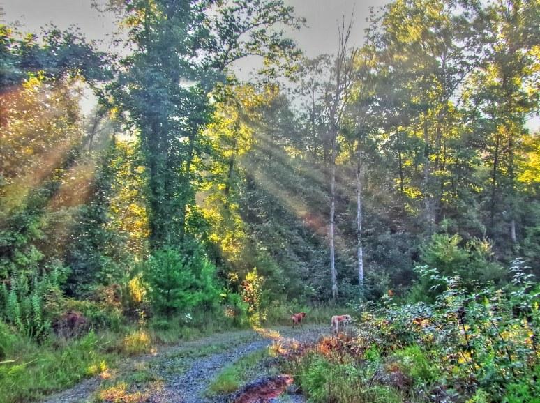 Morning Sunbeams in North Carolina