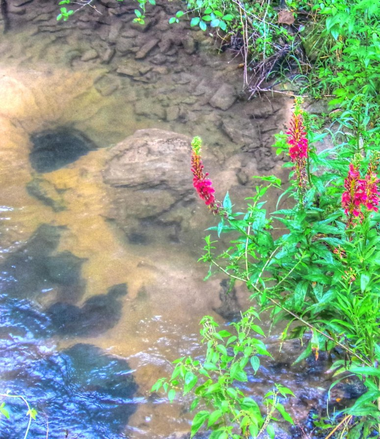 Otter Creek Red Wildflower