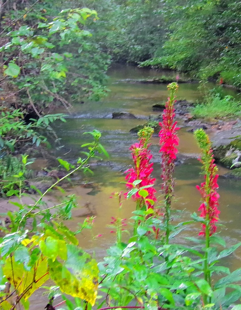 Otter Creek Red Flowers