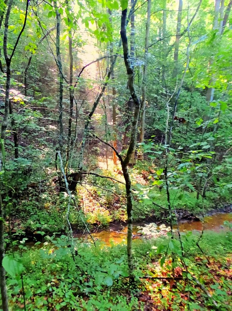 Branch in Carolina Forest