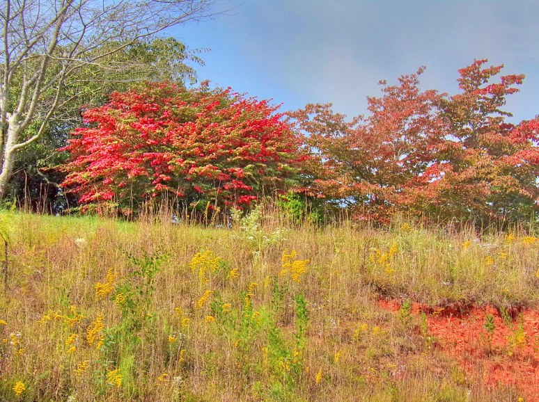 autumn on Cove Road