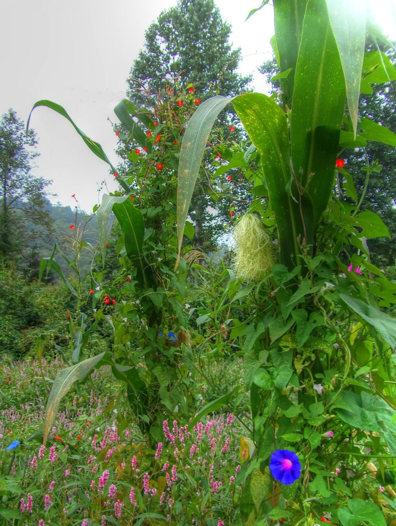 Corn Stalk and Wildflowers